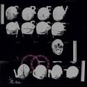 Crevasse / V0NT - Split LP